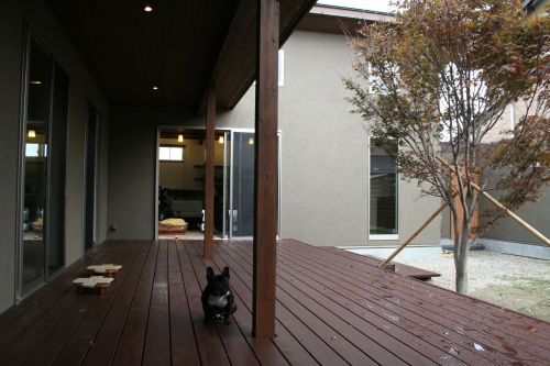 lives-in-french-bulldog014
