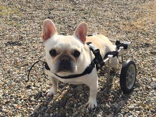 車椅子のサク