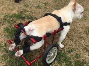 車椅子サク