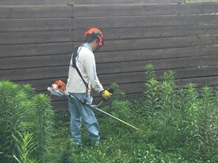 STIHLの草刈機。