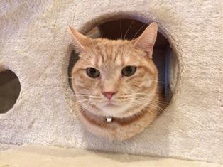 猫カフェごろーにゃ
